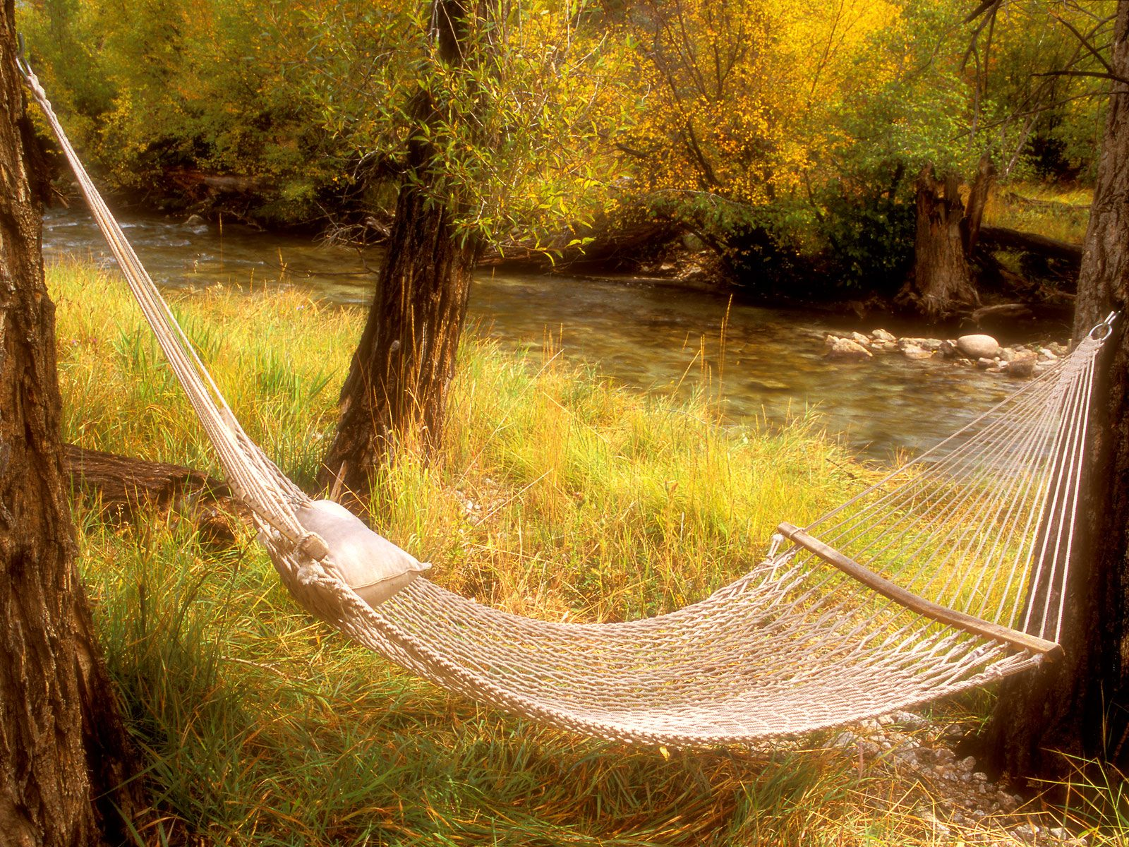 Peaceful Hammock Near a Stream Colorado