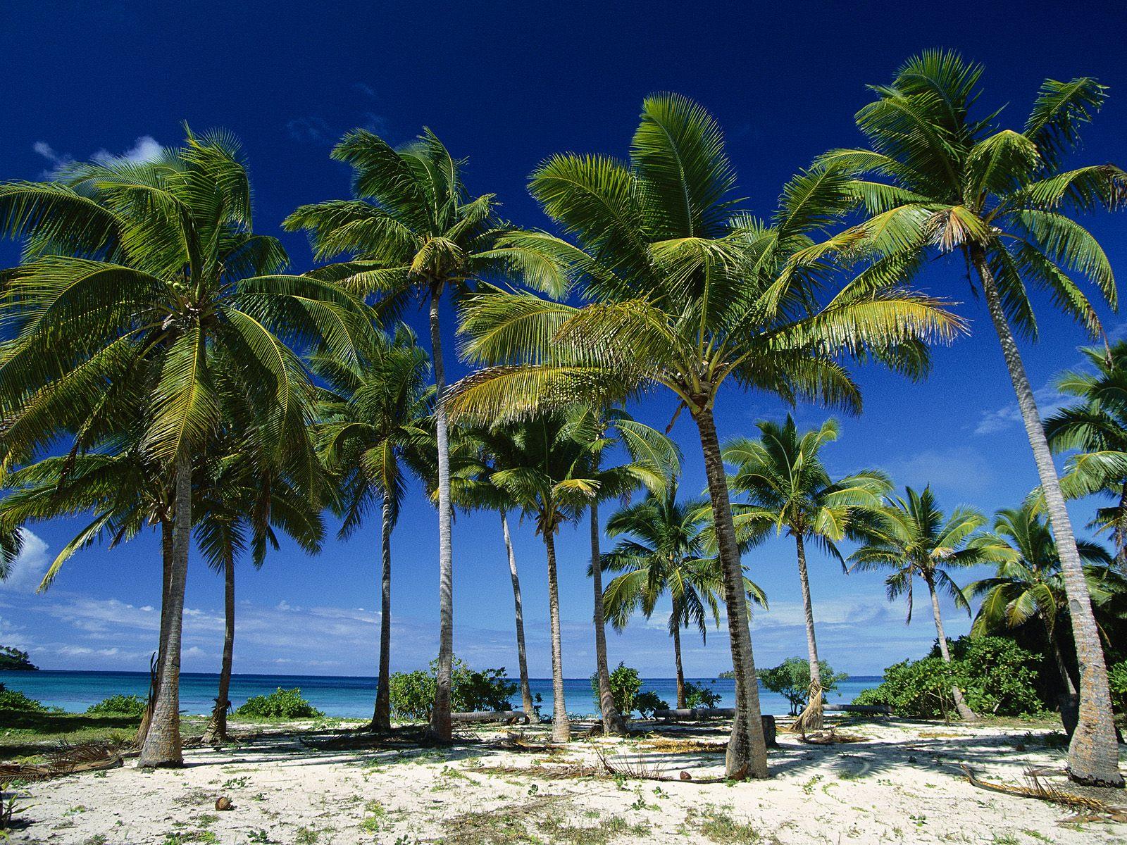 Coconut_Palms_Taunga_Island_Vava'u_Island_Group_Tonga.jpg