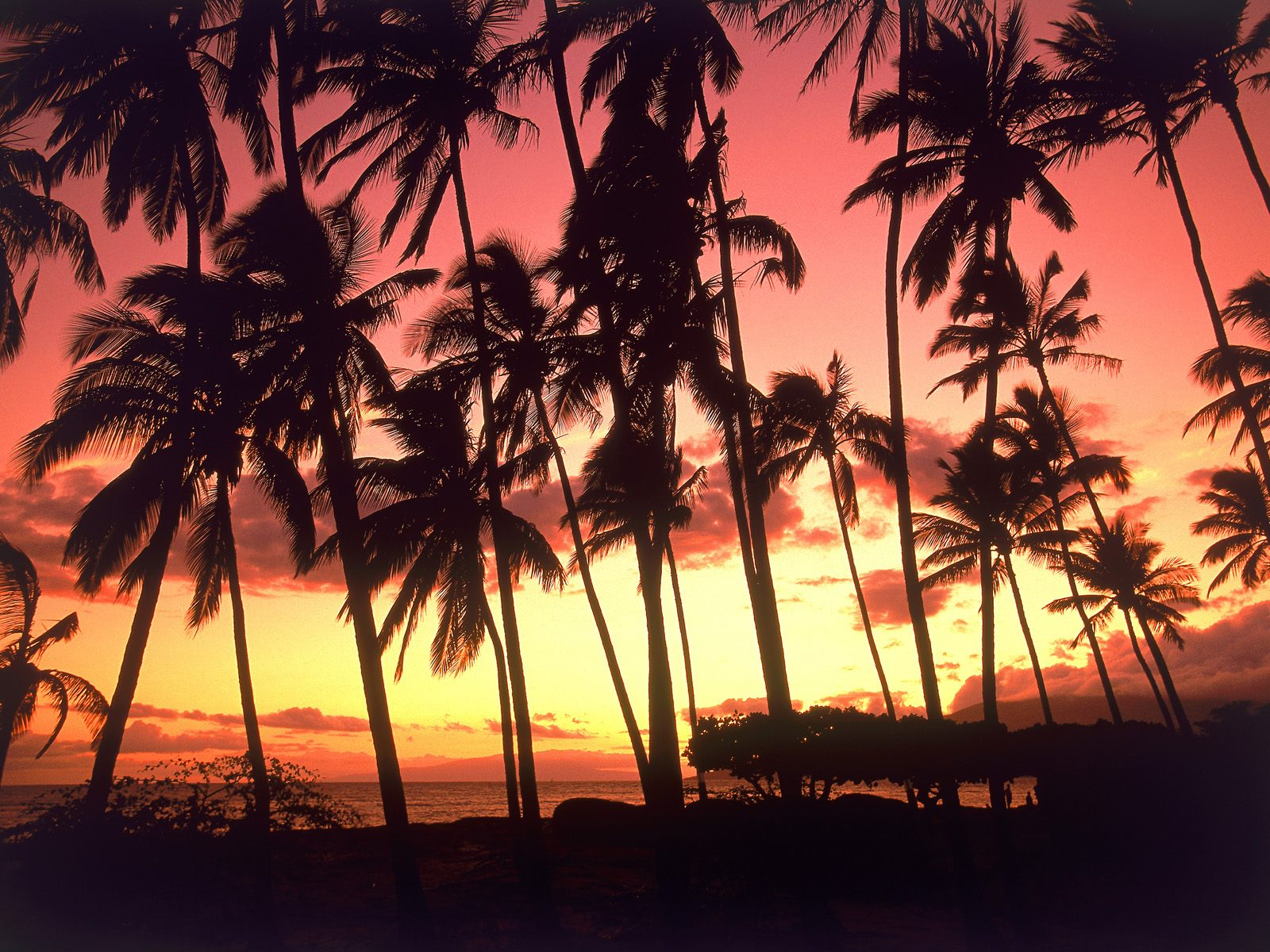 Hawaiian Sunset Hawaii picture, Hawaiian Sunset Hawaii photo ...