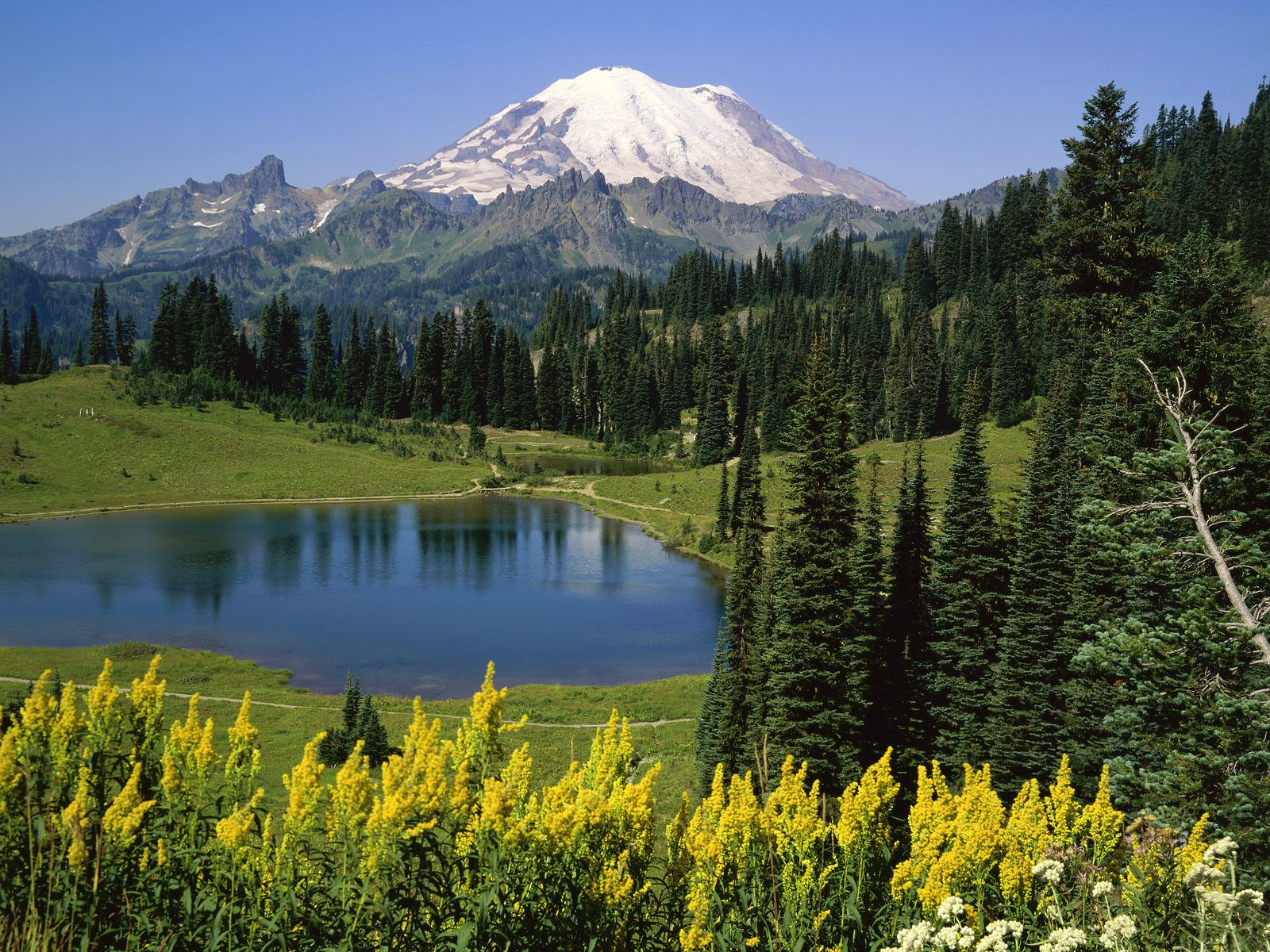 Natural Beauty Mount Rainier National Park Washington
