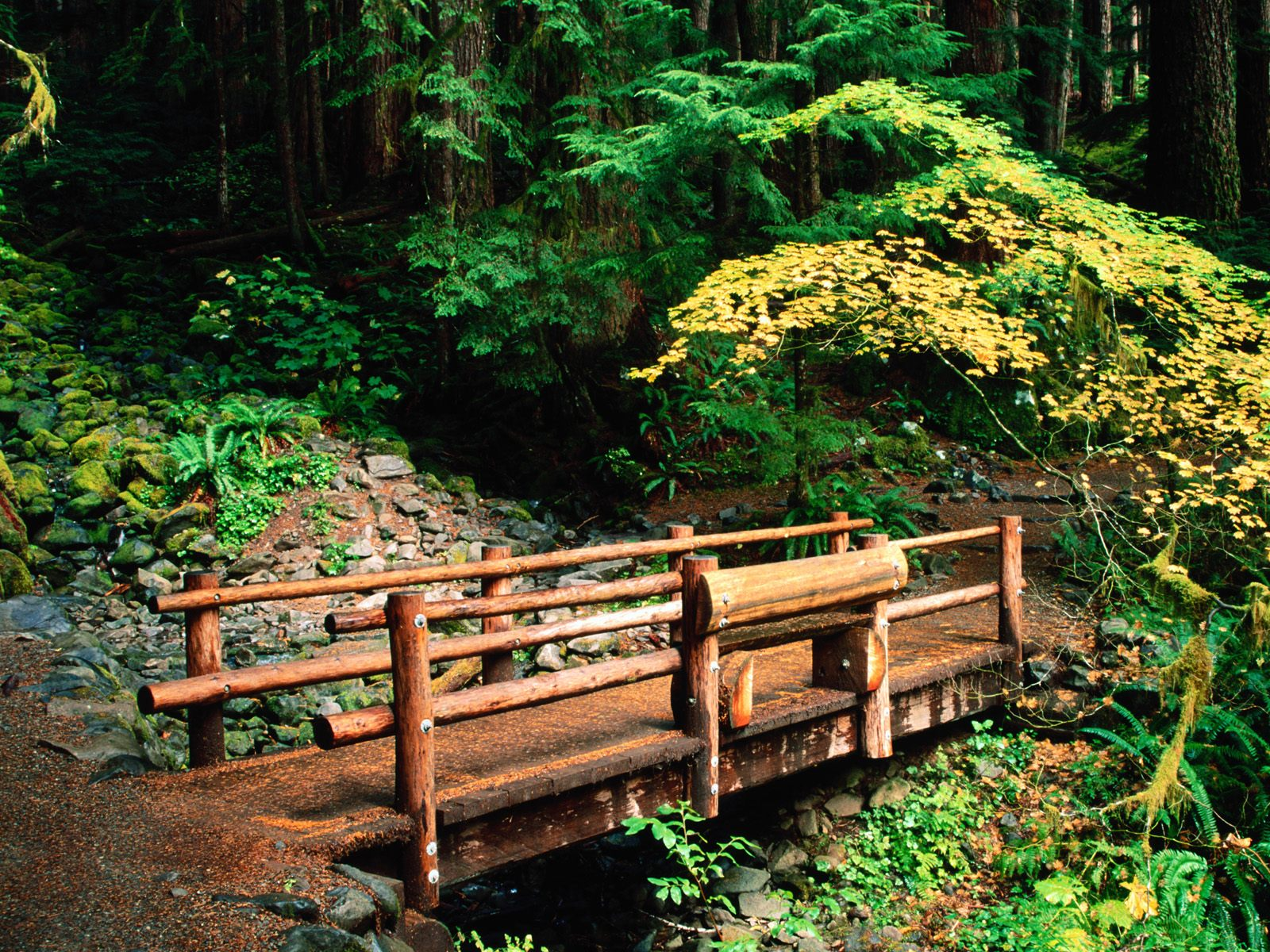 Sol Duc Falls Trail Olympic National Park Washington