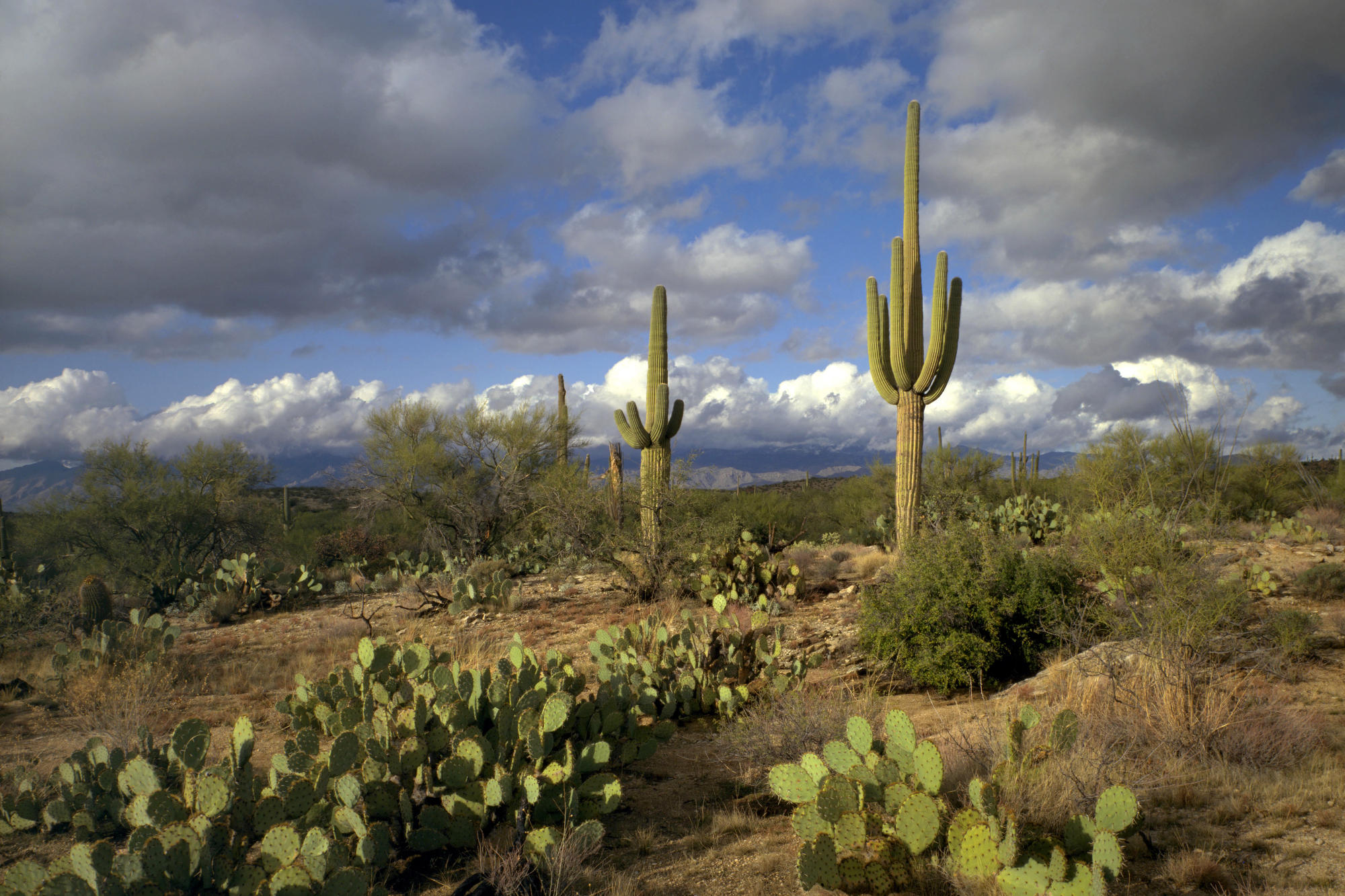 Arizona nice