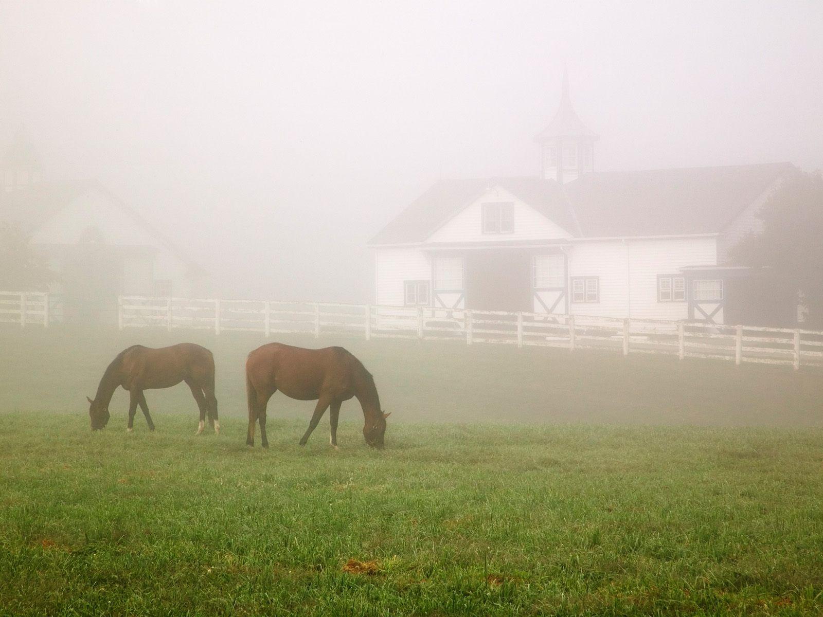 Manchester horse farm lexington kentucky picture for Horse farm