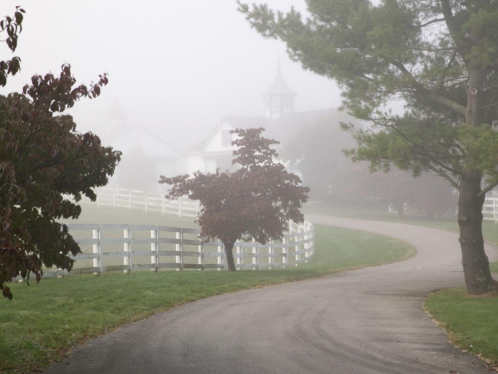 Manchester horse farm on a foggy morning lexington for Horse farm