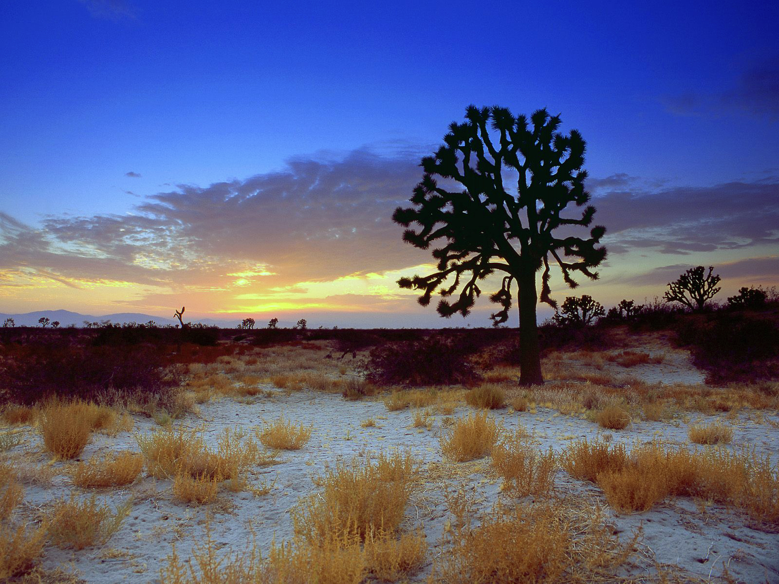 Joshua Tree Sunset Mojave Desert California