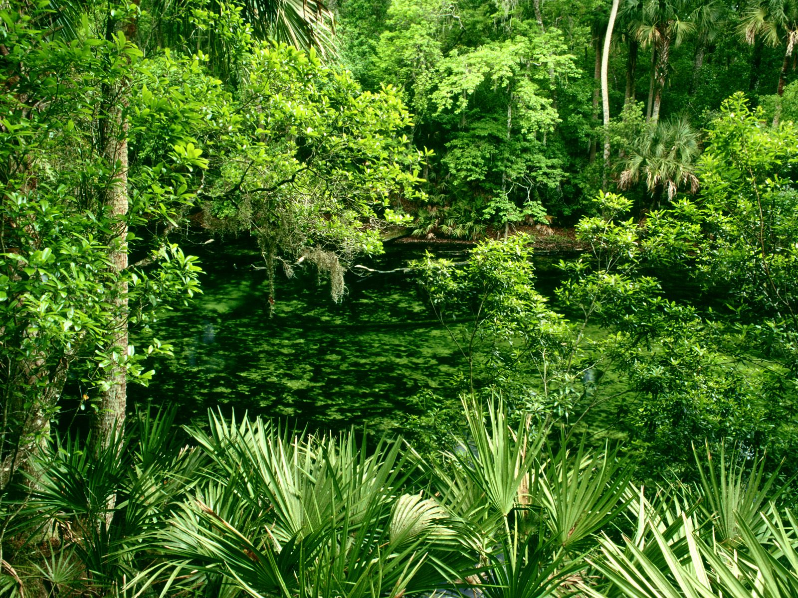 Blue spring state park florida 1600 x 1200 picture