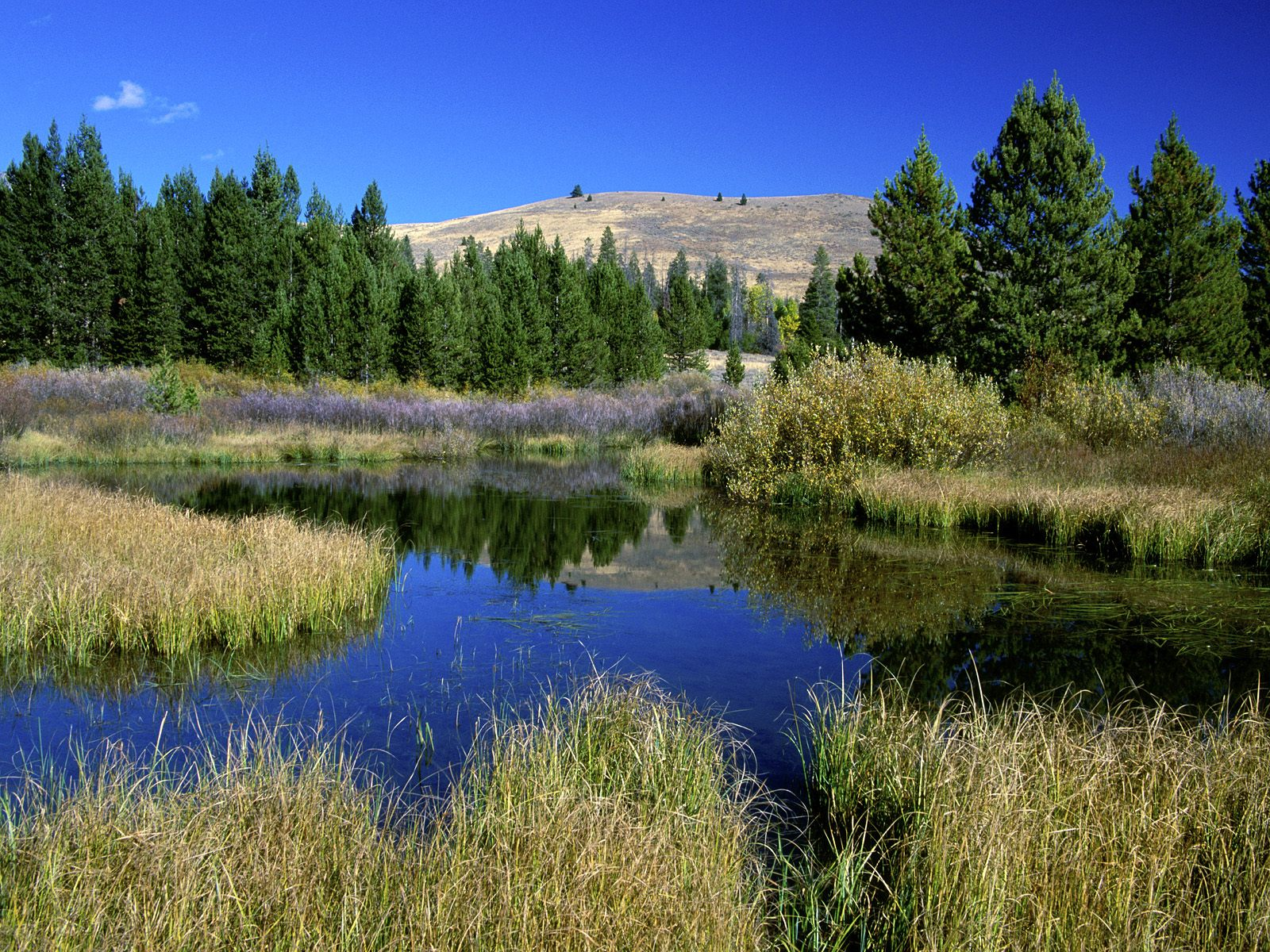 Beaver Ponds Sun Valley Idaho