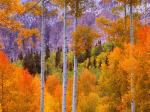 Fall Aspens Cimarron Road Colorado