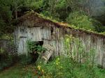 An Old Abandoned Barn Williamson County Tennessee