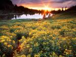 Gold King Basin San Juan Colorado