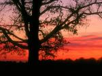 Oak Tree at Dawn Oldham County Kentucky