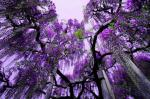 Ashikaga-flower-garden-japan